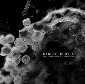 Stuart A.Staples - Minute Bodies OST